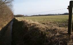 Weids landschap